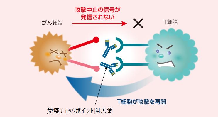 免疫 チェック ポイント 阻害 剤 【UPDATE】免疫チェックポイント阻害薬、抗PD-1/PD-L1/CTLA-4抗体